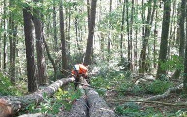septembre-2021-chantier-forestier-avec-les-classes-de-1ere-et-tle-bp-foret